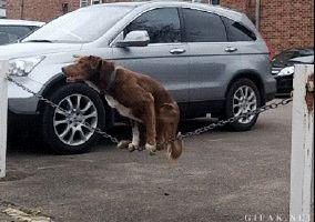 Perro haciendo equilibrios sobre una cuerda.