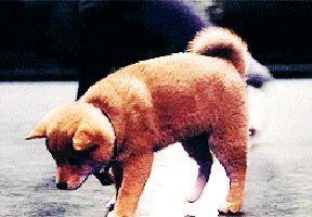 Cría de perro intentando rascarse sin éxito.