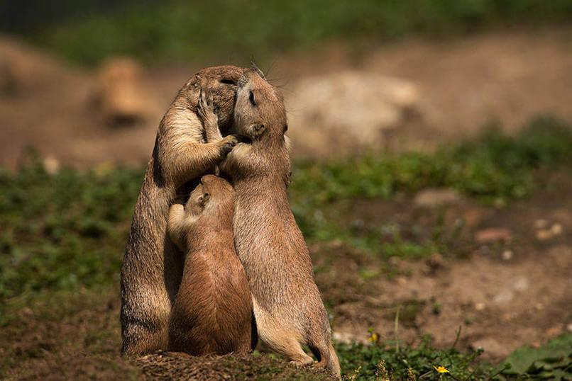 Un gran abrazo