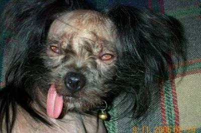 Perro del exorcista
