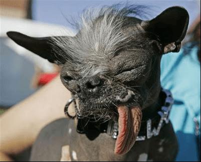 El perro lagarto