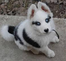 el perro más adorable
