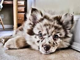 El perro más salvaje
