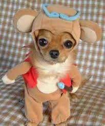 El perro disfrazado de perro