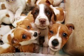 Los perros inseparables