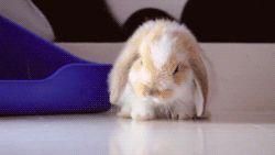 Conejo claro durmiendo
