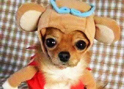 Perro disfrazado de perro