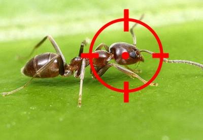 Matar hormigas