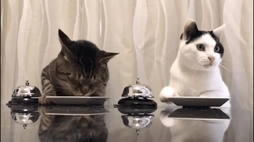 Gatos pidiendo comida