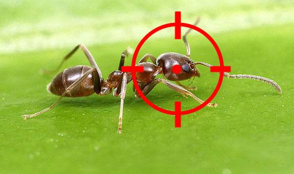 Hormigas gallery - Plaga de hormigas en mi casa ...