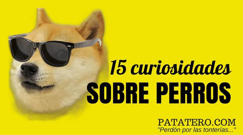 15 curiosidades sobre perros