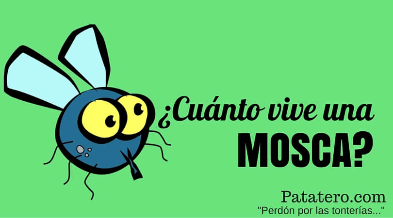 Cuánto tiempo vive una mosca